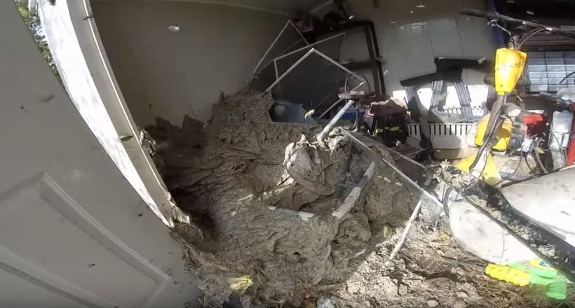Відео: Чоловік намагається позбутися величезного гнізда шершнів, зайняв полсарая