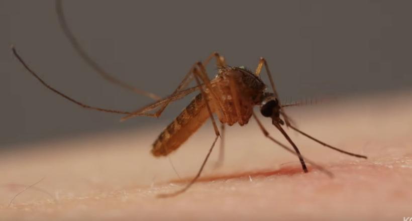 Відео: Макрозйомка про те, як комар п'є кров у людини