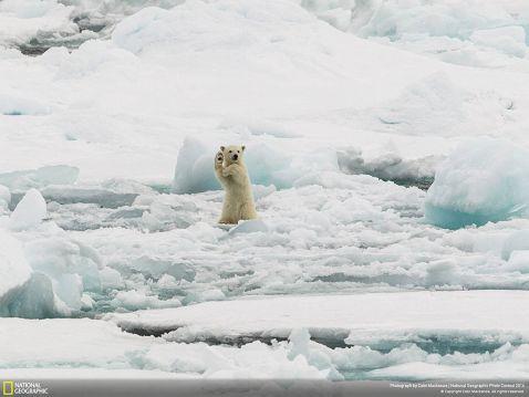 20 кращих фото живої природи від National Geographic Photo Contest 2014