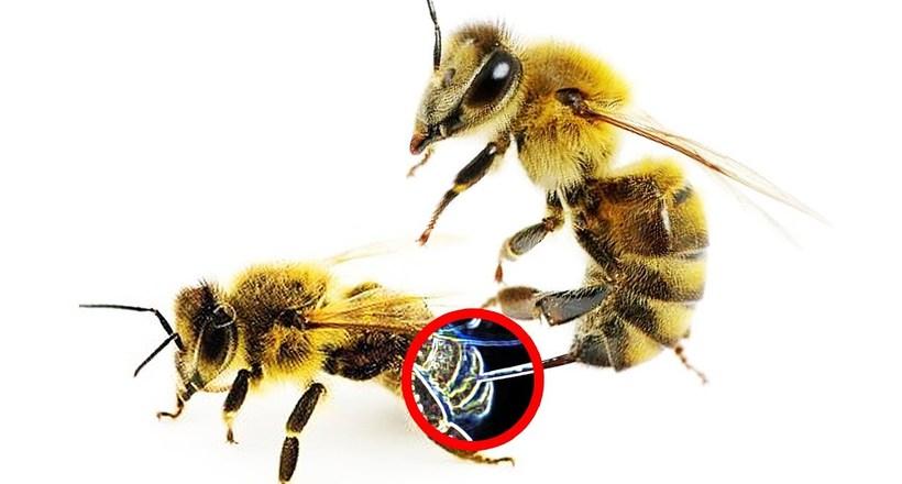 Відео: Може бджола вжалити бджолу та інші цікаві факти про збирачів нектару