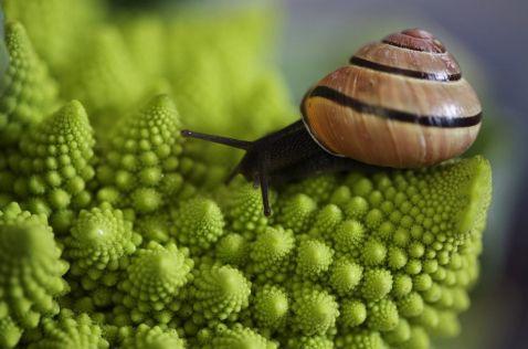 20 приголомшливих знімків з фотоконкурсу National Geographic