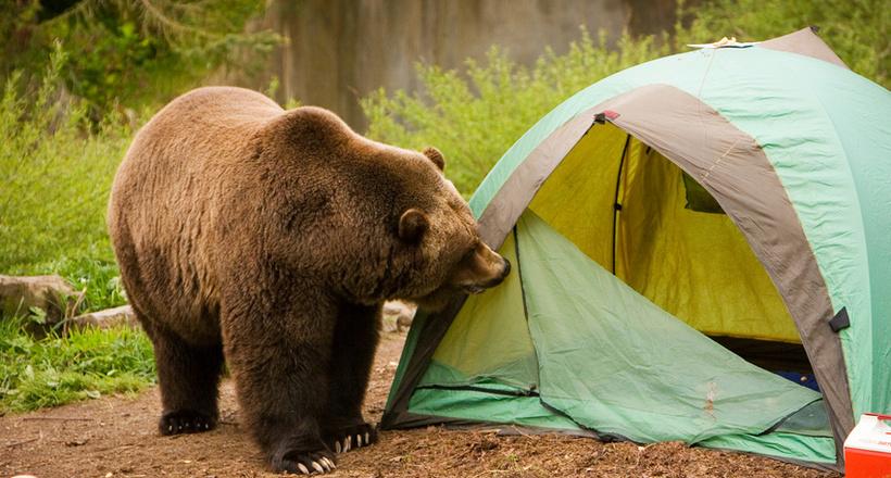 Кричати і тікати марно: як вести себе при зустрічі з ведмедем