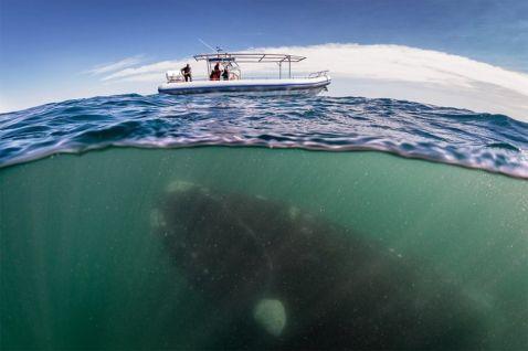 25 фотографій на грані двох світів: під водою і над нею