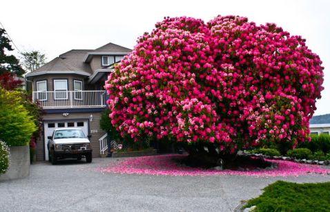 16 найбільш чудових дерев в цьому світі