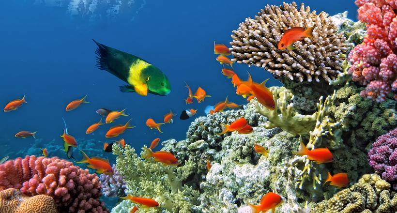 Корали — це тварини або рослини?