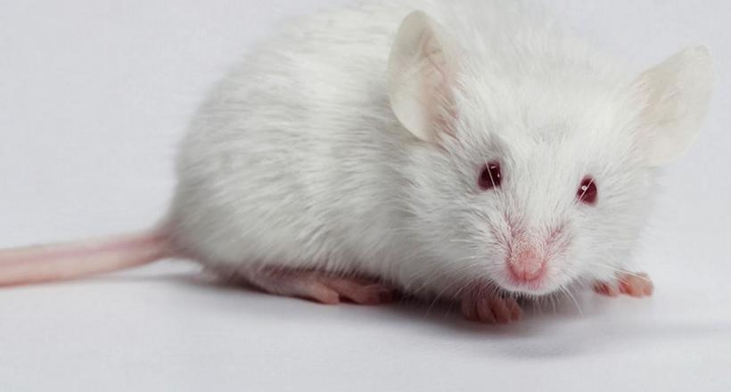 Нова лапа, хвіст і навіть голова: які тварини здатні регенерувати частини тіла