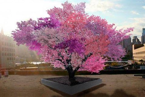 Найунікальніше дерево в світі
