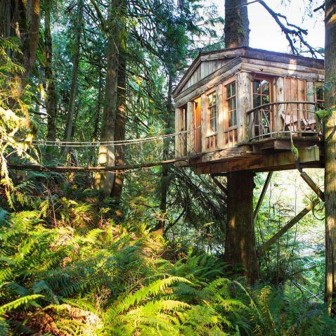 20 легендарних будинків на деревах зі всього світу (частина 1)