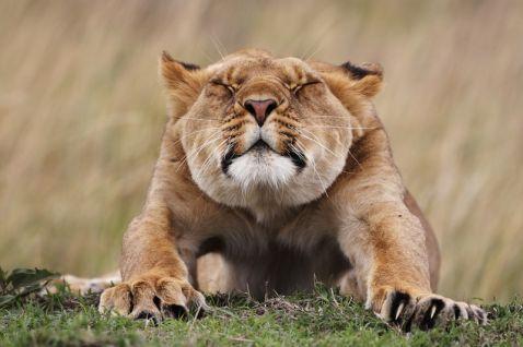Топ-10 найкращих фотографій дикої природи. Кожна з них - шедевр!