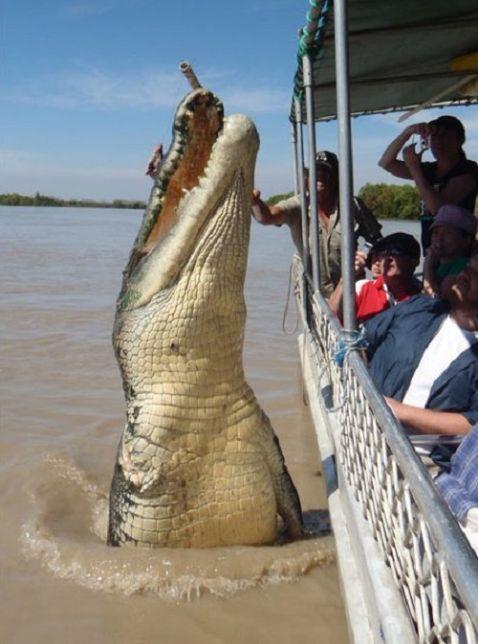 20 гігантських тварин, при вигляді яких на лобі виступає холодний піт