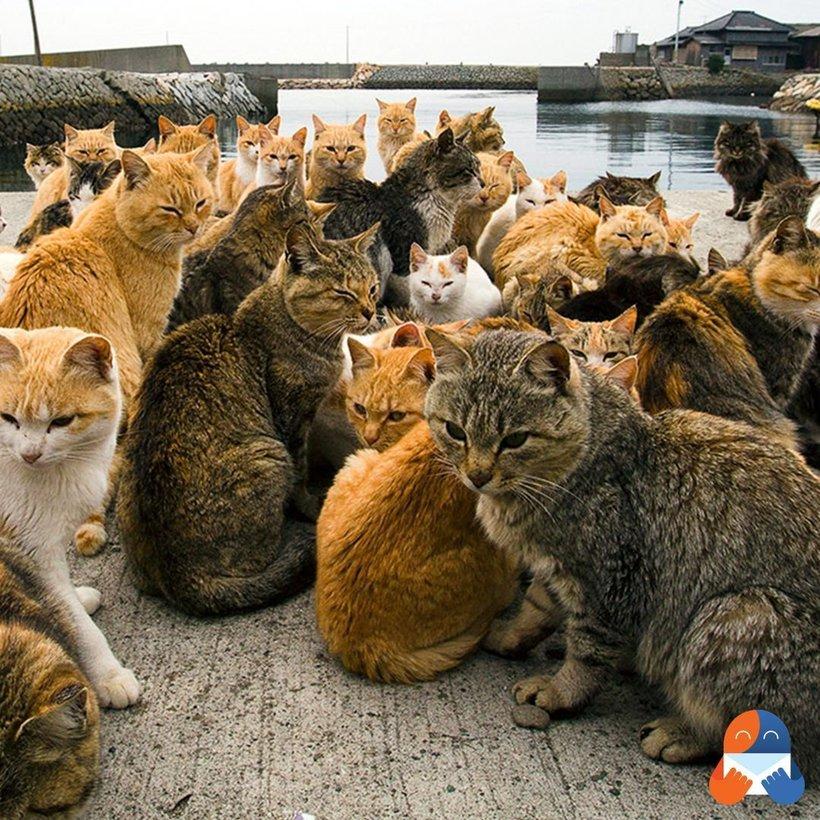 10 місць на планеті, які повинні відвідати всі любителі кішок