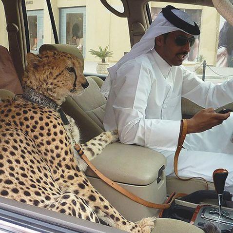 20 дуже дивних речей, які зустрічаються в Дубаї щодня