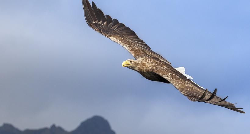 Каліфорнія, ПАР і Антарктида: куди летять російські птиці на зимівлю