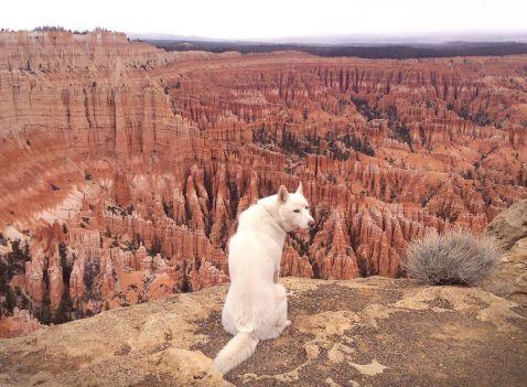 23 фото незвичайних пригод людини і його собаки на просторах дикої природи