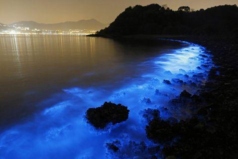 Фантастичне сяйво біолюмінесцентного планктону у водах біля берегів Гонконгу