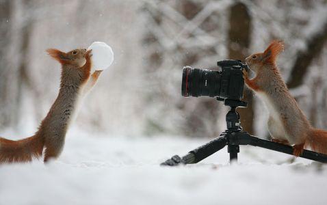 Російський фотограф відобразив найсимпатичніших і забавних білок на світі