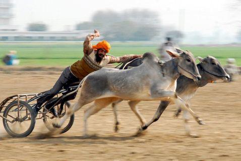 Сільські Олімпійські ігри в Індії