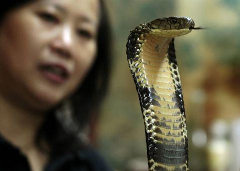 Як готують зміїний суп в Гонконзі?