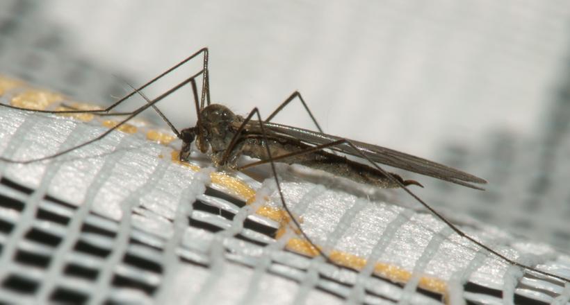 Сотні тисяч комарів в рік: навіщо в Китаї розводять комарів на заводі