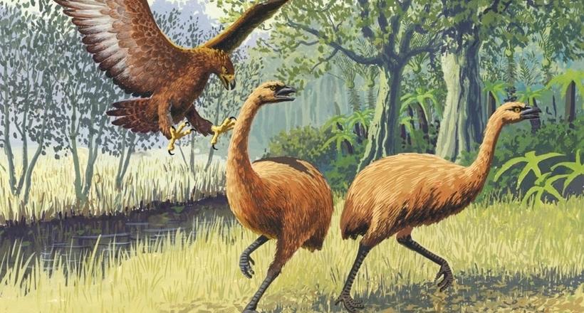 Самий великий, сильний і швидкий: чому вимер орел Хааста у Новій Зеландії