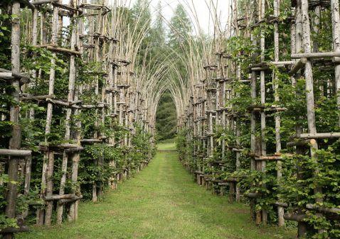 Величний собор, створений з живих дерев, що дихають
