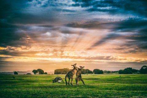 30 знімків Тасманії, від яких неможливо відірвати погляд