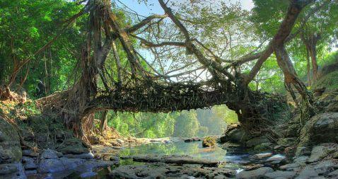 «Живі» мости в Індії, піти якими наважиться не кожен