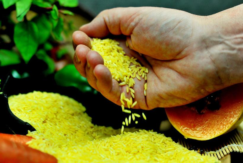 Результат пошуку зображень за запитом золотий рис