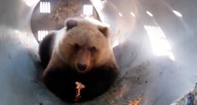 Відео: Охотинспекторы вирішили заманити обікрав мисливців ведмедя пиріжками