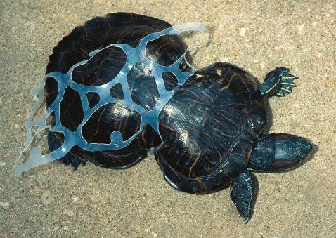 22 несамовитих фото результату забруднення планети, після яких ти завжди будеш утилізувати сміття