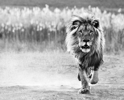 23 неймовірних фото тварин, від яких душа йде в п'яти