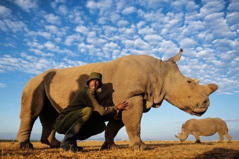 У цього самця носорога є ціла бригада озброєних охоронців!