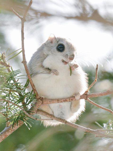 Японський острів Хоккайдо є домом для 7 неймовірно милих і незвичайних тварин