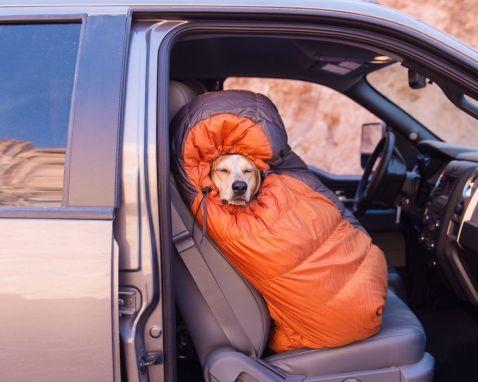 Найвідоміший пес інтернету вирушив на пошуки епічних пригод зі своїм господарем