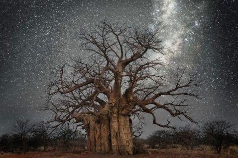 Бет Мун зробила чудові «космічні знімки найстаріших у світі дерев
