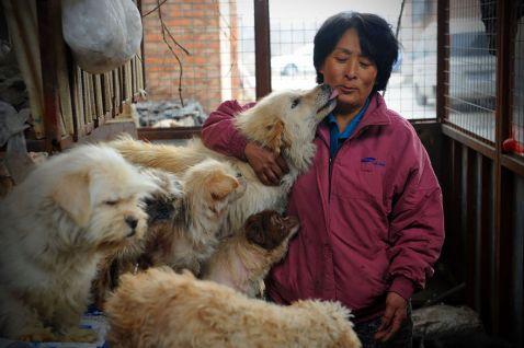 Китаянка проїхала 2400 км, щоб врятувати 100 собак від страшного кривавого фестивалю