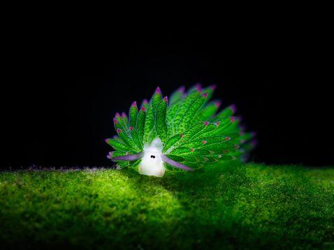 Це дивовижне створіння підкорило інтернет! Спробуй вгадати, що це!