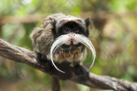 15 дивовижних тварин, яких ти напевно ще не бачив. Багатству фауни немає меж!
