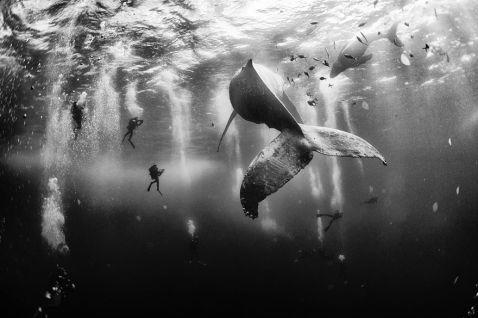 Феноменальні знімки переможців фотоконкурсу National Geographic Traveler