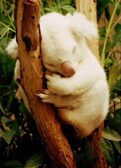 20 приголомшливо красивих тварин-альбіносів