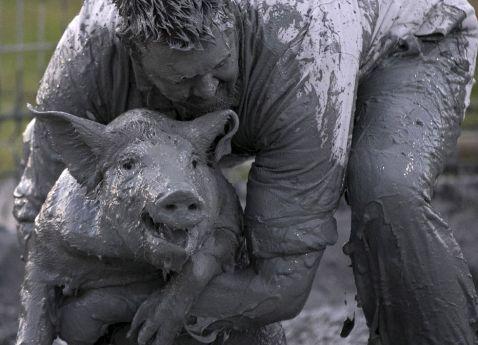 Свинський фестиваль у Квебеку