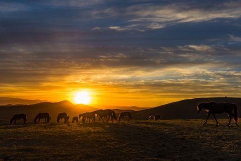 Чому поїздка в Монголію — це найгірше, що могло прийти вам в голову