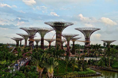 Сади майбутнього і супердерева у Сінгапурі