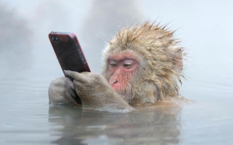 Джигокудани — парк снігових мавп, у яких закохуєшся з першого погляду