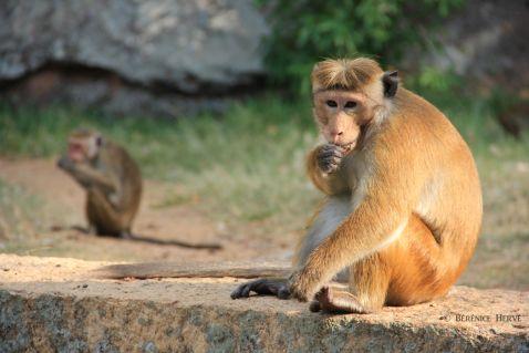 12 причин побувати на Шрі-Ланці