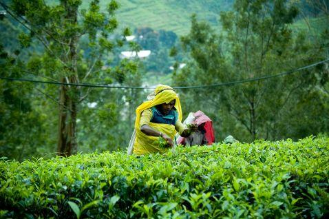 Топ-10 речей, які потрібно зробити на Шрі-Ланці