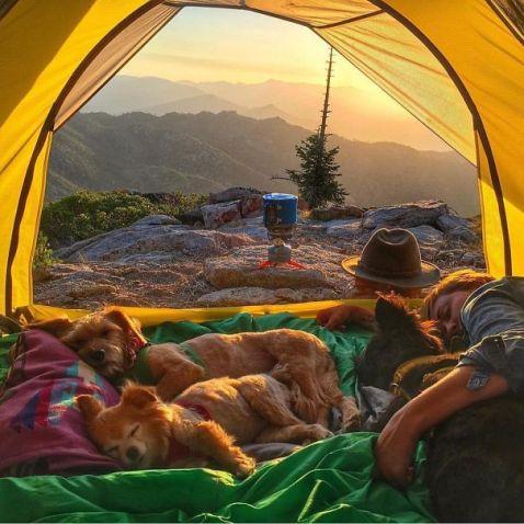 20 дивовижних фотографій Instagram, які надихнуть вас вирушити у похід зі своєю собакою