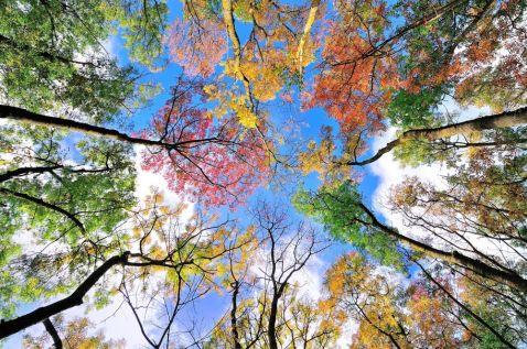 20 дивовижних знімків з усього світу, які доводять, що осінь — це щастя!