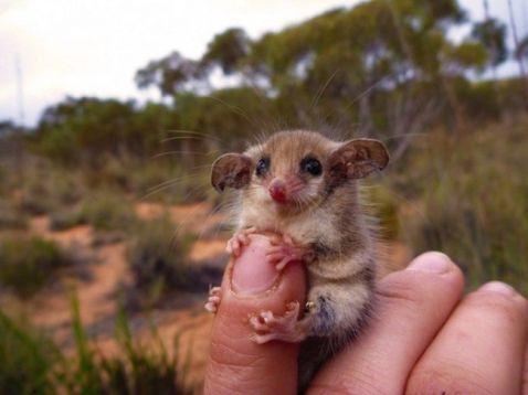 Смішні тварини Австралії, які зовсім не проти подружитися з людиною