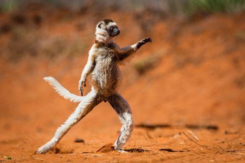 12 диких тварин, які змусили нас сміятися до упаду